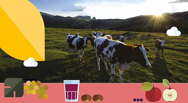 mucche valle di Siusi